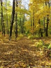 Лес осенью