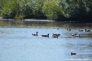 Сосуществование нескольких видов птиц