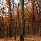 Осенний лес 2015