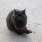 Кот - дармоед