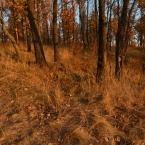 Трава - мурава