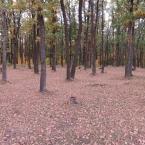 Лес отдыхает