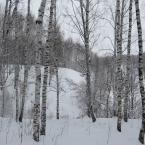 Зимние берёзки
